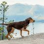 Фильм «Путь домой»: какая порода собаки? Где снимали?